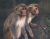 The use of primates in brain research